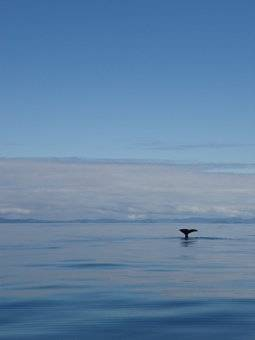 The first whale sighting!!