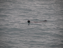 m_Last sealion of Isabela saying good-bye