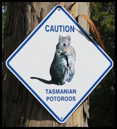 A Caution Potoroos