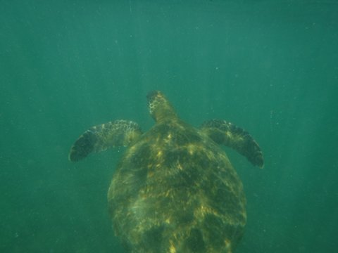 turtle pic